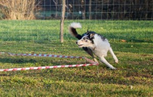 Champion Coaching - Hundetraining by Melanie Champion - Longieren