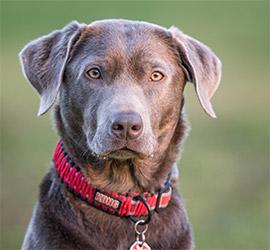 Champion Coaching - Hundetraining by Melanie Champion - Sachkundenachweis Theorie und Praxis SKN