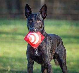 Champion Coaching - Hundetraining by Melanie Champion - Sachkundenachweis Theorie und Praxis
